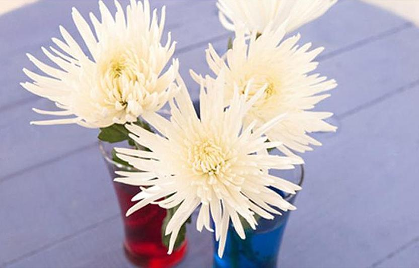 Turn white flowers into a rainbow bouquet! As flowers lose water to evaporation, they pull more water up through their stems. When food coloring is added to the water, the blossoms make an amazing transformation.
